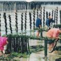 Les bouchots en 2001