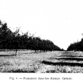 Les pommiers à cidre de la ferme de Carmin